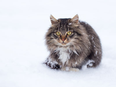 Does Freezing Kill Fleas?