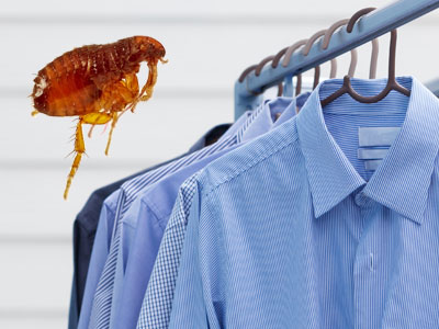 Will Dry Cleaning Get Rid of Fleas?