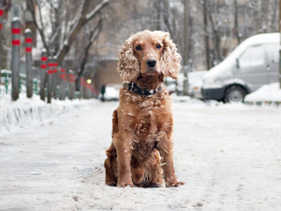 Do Fleas Die in the Winter?