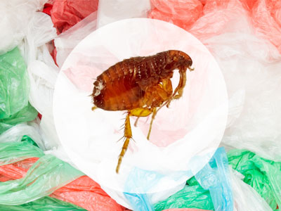 Can Fleas Survive in a Plastic Bag?